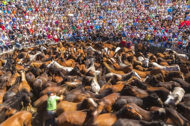 Sabucedo, Galicia, Spain - July 5, 2015: Round up of wild horses