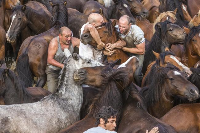 Sabucedo, Galicia, Spain - July 4, 2015: Men rounding up wild horses