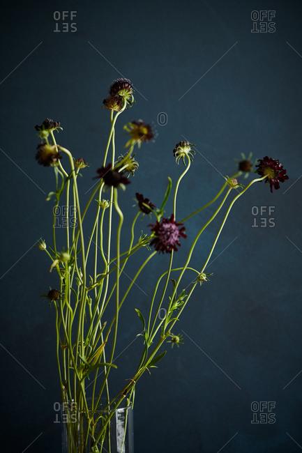 Still life of dark red flowers in glass vase