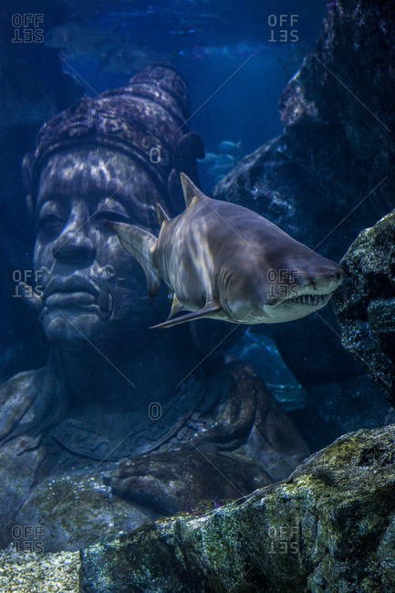 Shark swimming near the face of a submerged statue