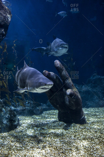 Sharks swimming near the hand of a submerged statue