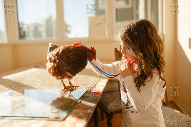 Young girl using a toy stethoscope on pet chicken