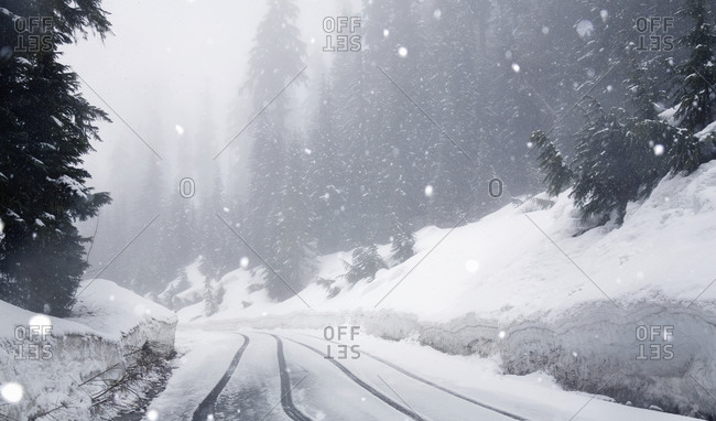 Snow falling on an empty road in a forest