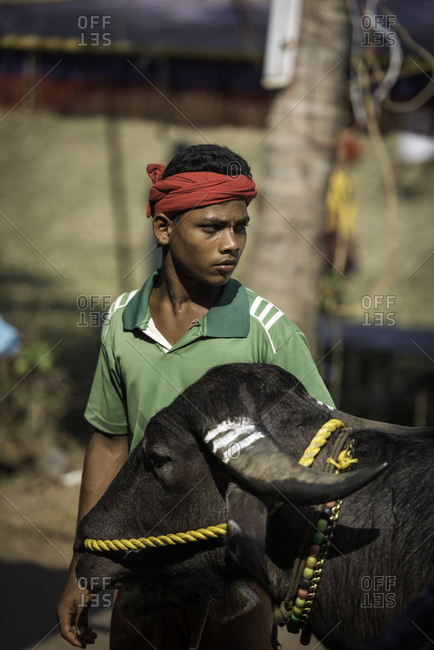 Young man standing next to his water buffalo prepared for a Kambala race in Karnataka, India