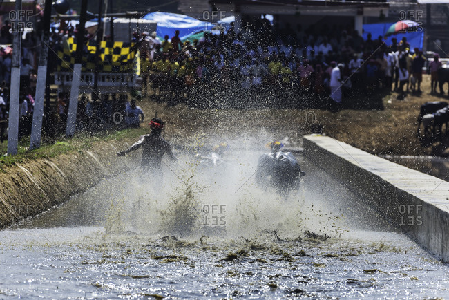 Back view of a man and a pair of water buffalo splashing through the water during a traditional Kambala race in Karnataka, India