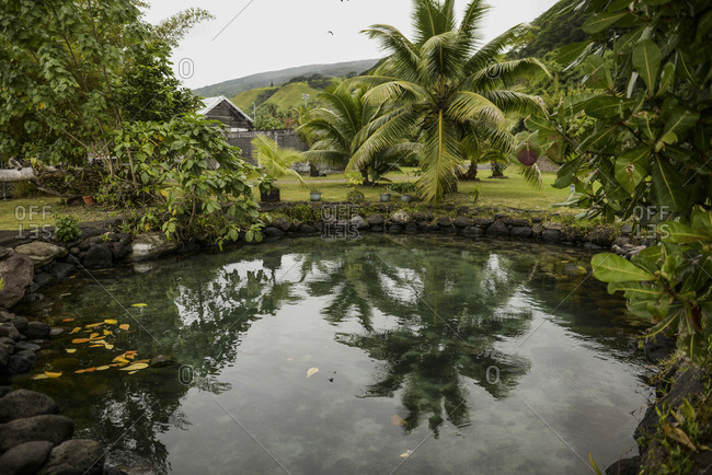 Pond surrounded by trees in Tahiti