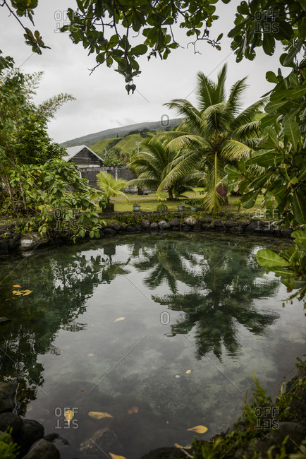Trees surrounding a pond in Tahiti