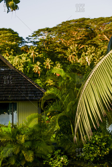 Palm tree branch in front of a cottage, Moorea, French Polynesia
