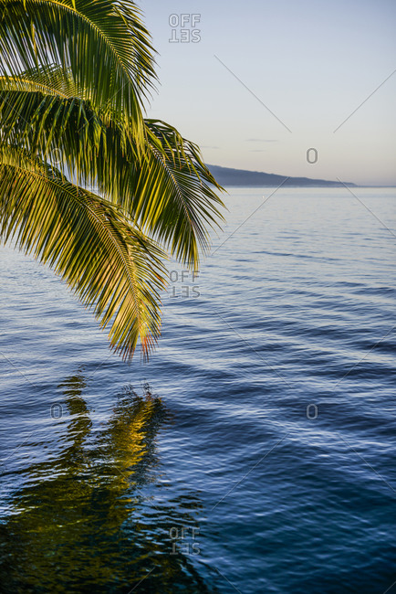Palm tree reflecting on the water off the island of Moorea, French Polynesia