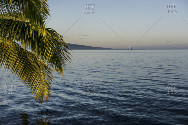 Palm tree reflecting on the water, Moorea, French Polynesia
