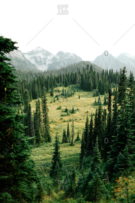 Clearing in an evergreen forest and distant mountains