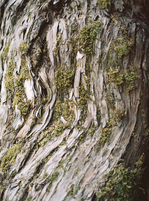 Close-up of moss growing on tree bark