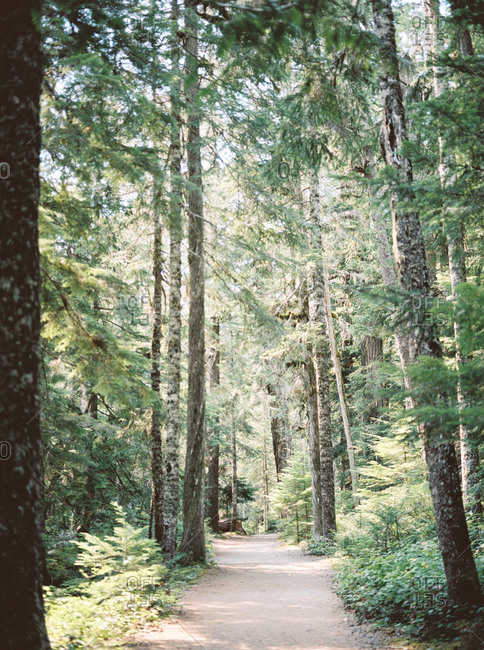 Nature trail through a green forest