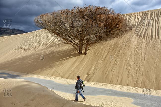 Man walking by a tree in a sand dune near Tarifa in Spain