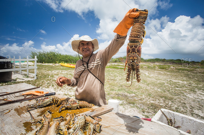 Anegada Island, British Virgin Islands, British Virgin Islands - May 12, 2014: A man holds a fresh lobster up above a wooden table where he guts other lobsters