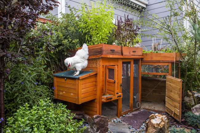 A homemade structures chicken coop