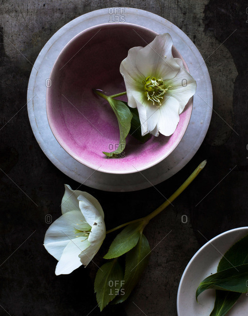 Flower blossoms and dishes