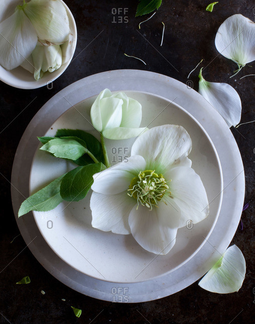 Flower petals on dishes
