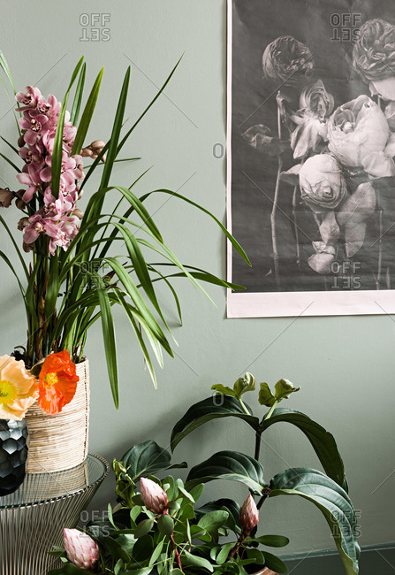 Various plants in a room