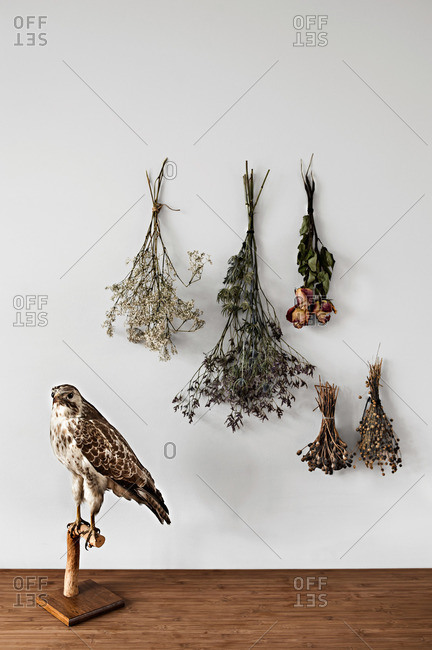 Owl and dried flowers