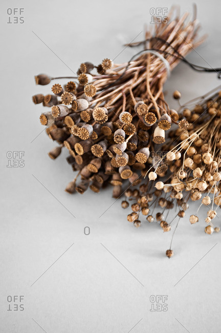 Dried plants on white background