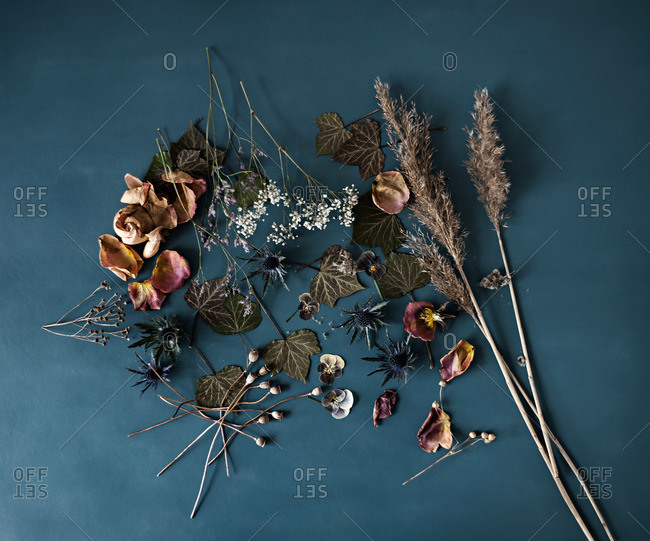 Various dried plants and flowers
