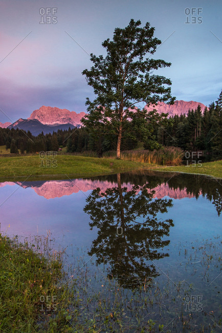 Tree reflected in a mountain pond at sunset in the Bavarian Alps