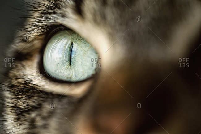 Close-up of a cat's eye