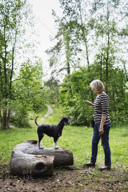 Dog standing on log in front of senior woman at field