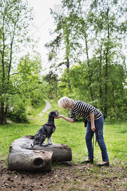 Senior woman stroking dog standing on log at field