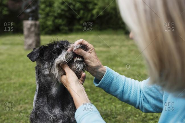 Senior woman examining dog's teeth at yard