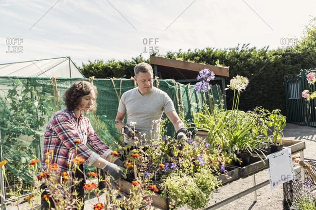 Couple gardening at plant nursery