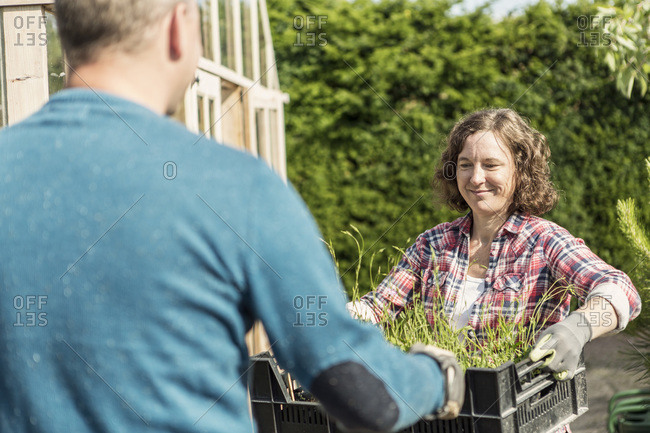 Smiling woman giving plant crate to man at community garden