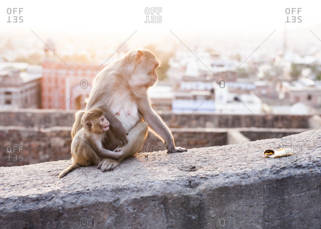 The Monkey Temple in Jaipur, India