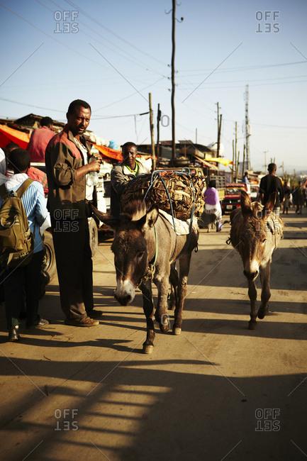Donkeys in market in Addis Ababa, Ethiopia