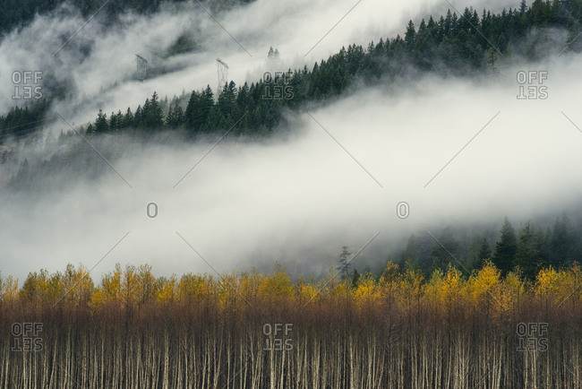 Foggy forest covered mountains