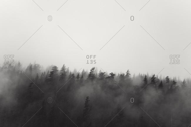 Trees shrouded in fog
