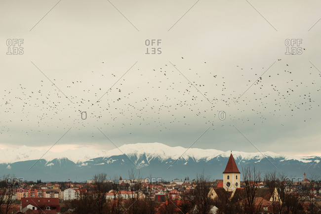 Birds over town by mountains