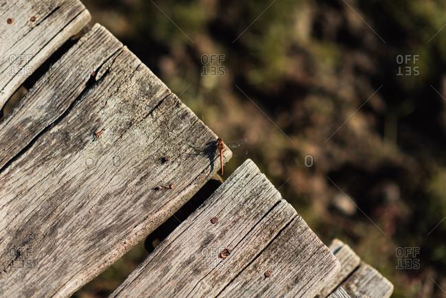 Dragonfly on a board