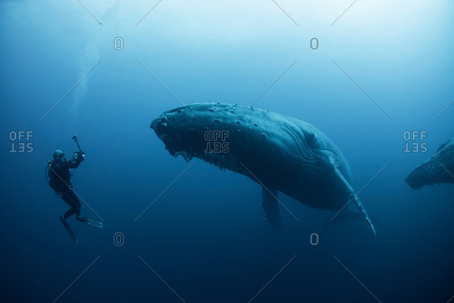 Underwater view of diver photographing humpback whale, Revillagigedo Islands, Colima, Mexico