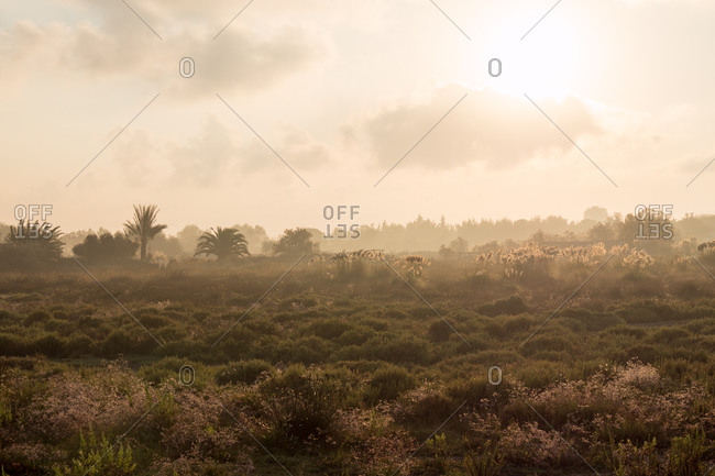 Hazy sun over a field near Camargue,  France