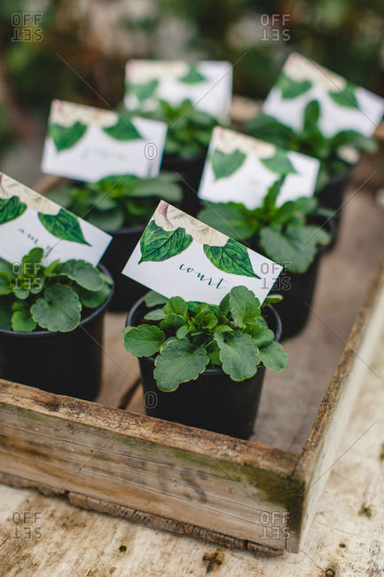 Elevated view of tray of potted plant wedding favors