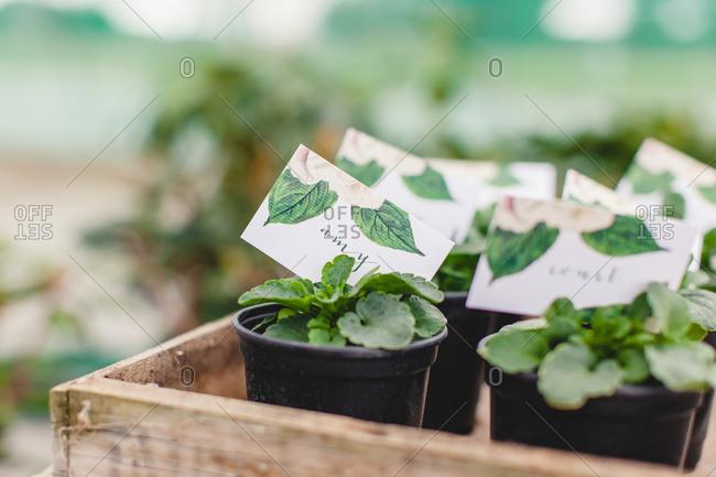 Close-up of tray of potted plant wedding favors