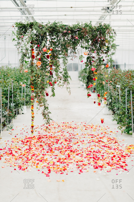 Floral arch set up in greenhouse for wedding