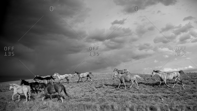 Herd of horses running along a fenceline under stormy skies