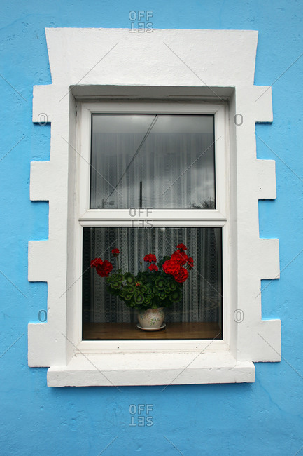 Red flowers in a window of a blue house