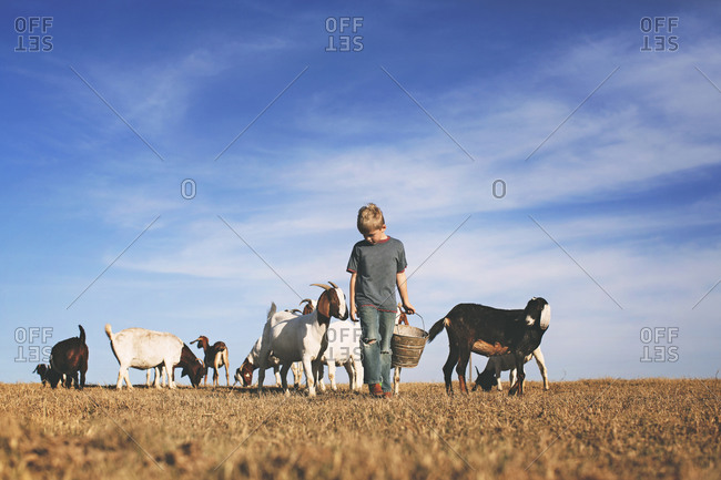 Little boy walking with goats carrying a feed pail