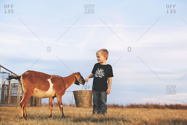 Little boy standing with a goat holding a feed pail