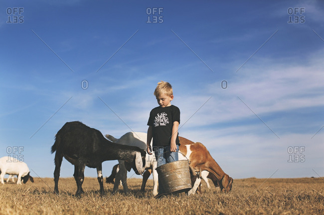 Little boy standing in a field with goats holding a food pail