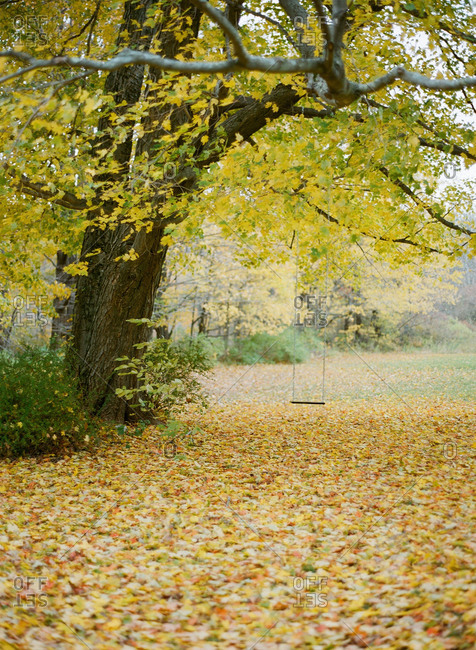 An empty swing hanging from a tree in an autumnal wood
